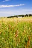 Landwirtschaftliches Gras-Feld mit Hintergrund-Stall Lizenzfreies Stockbild