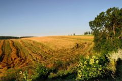 Landwirtschaftliches Herbstfeld Stockbilder