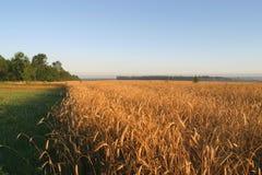 Landwirtschaftliches Herbstfeld Stockbild