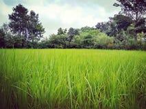 Landwirtschaftliches Indien Stockfotografie