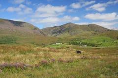 Landwirtschaftliches Irland lizenzfreie stockbilder