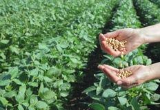 Landwirtschaftliches Konzept Stockbilder