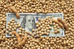 Landwirtschaftliches Konzept, Sojabohne und Dollargeld Lizenzfreie Stockfotos