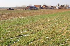 Landwirtschaftliches Land Stockbilder