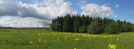 Landwirtschaftliches Panorama des Sommers stockfoto