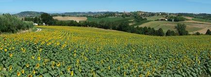 Landwirtschaftliches Panorama von Penango Lizenzfreie Stockfotos