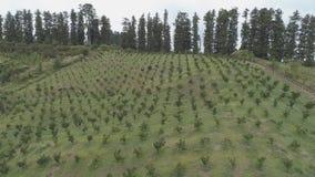 Landwirtschaftliches Pflanzen auf dem Bergabhang georgia stock video