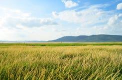 Landwirtschaftliches schönes Land stockfoto