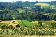 Landwirtschaftliches Serbien Lizenzfreie Stockfotografie