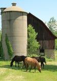 Landwirtschaftliches szenisches Stockfotos