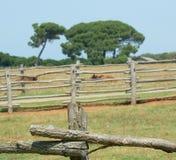 Landwirtschaftliches szenisches Stockbild