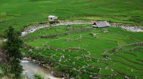 Landwirtschaftliches terassenförmig angelegtes Labyrinth Stockbilder