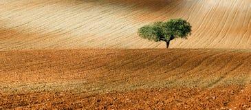 Landwirtschaftliches view3 Lizenzfreies Stockfoto