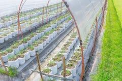 Landwirtschafts-Bauernhof im Sonnenschutz-grünen Haus Stockfotografie