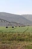Landwirtschafts-Bewässerung-Sprenger Stockfotografie