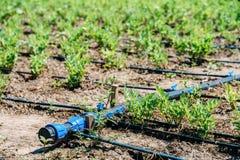 Landwirtschafts-Bewässerungssystem auf Gemüsefeld Stockbilder