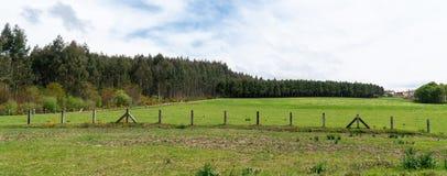 Landwirtschaftsbauernhof-Weidelandschaftspanorama lizenzfreie stockfotografie