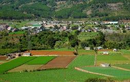 Landwirtschaftsbereich, Dalat, Vietnam, Feld, Gemüsebauernhof Lizenzfreie Stockbilder