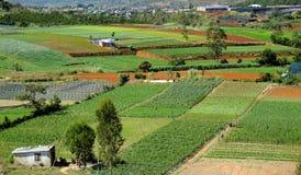 Landwirtschaftsbereich, Dalat, Vietnam, Feld, Gemüsebauernhof Stockfotografie