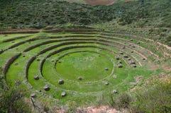 Landwirtschaftsexperiment der Inkas Stockbild