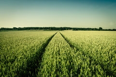 Landwirtschaftsfeld Lizenzfreies Stockbild