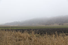 Landwirtschaftsfeld Stockbild