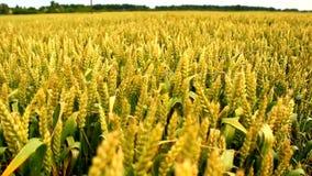 Landwirtschaftsfeld stock footage