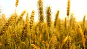 Landwirtschaftsfeld stock video