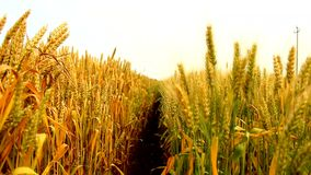 Landwirtschaftsfeld stock video footage