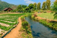 Landwirtschaftsfeld des Mischungsbiohof- und -bewässerungssystems stockfoto