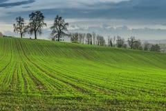 Landwirtschaftsfeld im Herbst Stockbild