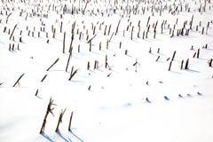 Landwirtschaftsfeld im Winter Stockbild