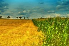 Landwirtschaftsfeld mit blauem Himmel, reifem Mais und geerntetem Weizen Stockbilder