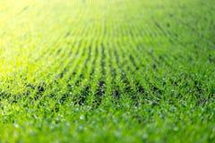 Landwirtschaftsfeld mit, fruchtbare frische Grünpflanzen lizenzfreies stockbild