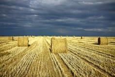 Landwirtschaftsfeld nach Ernte mit Rolle des Strohs Stockbild