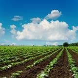Landwirtschaftsfeld und blauer Himmel mit Wolken über ihm Lizenzfreie Stockbilder