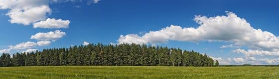 Landwirtschaftsfeld und -wald unter blauem Himmel Lizenzfreies Stockfoto