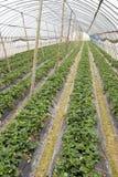 Landwirtschaftshallebauernhof Lizenzfreie Stockbilder