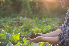 Landwirtschaftshand, die einen Babybaum hält Stockfotografie