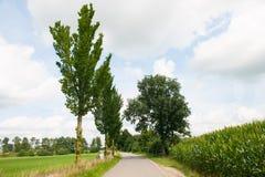 Naturlandschaft mit Abzugsgraben und Bäumen Stockfotografie