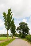 Naturlandschaft mit Abzugsgraben und Bäumen Stockbild