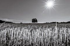 Landwirtschaftslandschaft mit einer brennenden glänzenden Sonne über der trockenen FI stockbilder