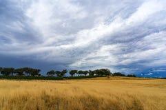 Landwirtschaftslandschaft mit Weizenfeld und drastischem stürmischem Himmel Lizenzfreies Stockbild