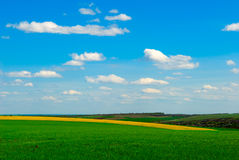 Landwirtschaftsrapsfeld Stockbilder