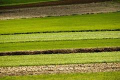 Landwirtschaftsschichten - Felder und Wiesen Stockfoto