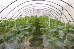 Landwirtschaftszeltbauernhof Lizenzfreies Stockbild