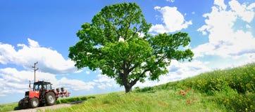 Landwirtschafttraktor und großer grüner Baum Lizenzfreies Stockbild
