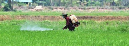 Landwirtsprühschädlingsbekämpfungsmittel auf dem grünen Reisgebiet Stockbild