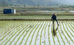 Landwirtsprayinsektenvertilgungsmittel Lizenzfreie Stockfotos