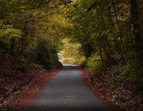 The lane in autumn Stock Photography